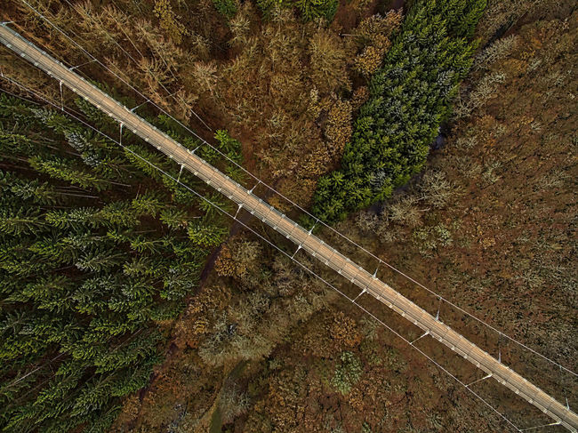 geierlay-series. you have to get up really early, to grab some shots without anybody in them. usually there is always somebody on that bridge... not this time, though__ Aerial Aerial Photography Aerial View Birdseyeview Bridge Day Dji Drone  Dronephotography Forest Forest Photography Geierlay Germany Nature No People Outdoor Outdoor Photography Phantom 3 Suspension Bridge Trees Winter Flying High