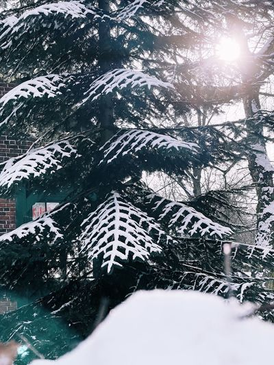 Snow covered plants and trees during winter