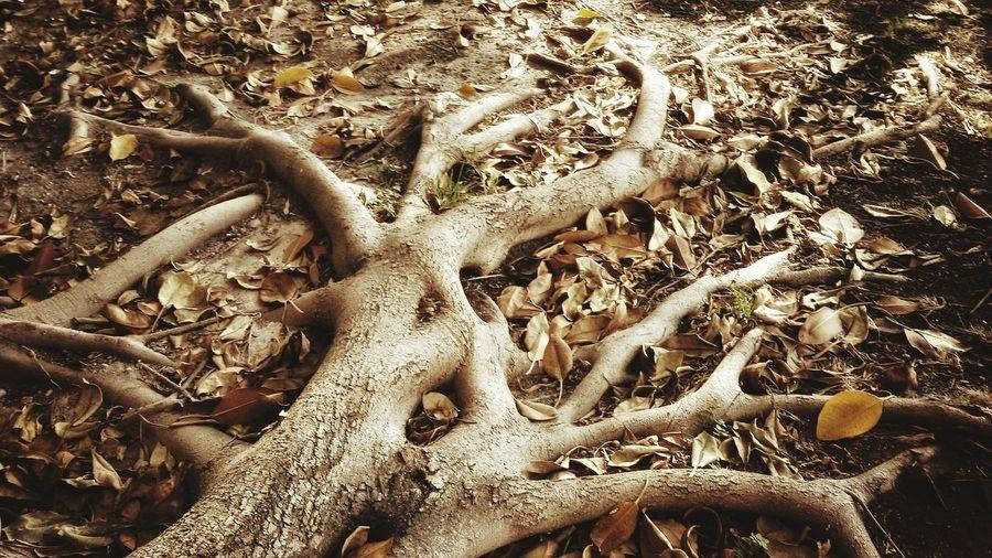 Nature Roots Roots Of Tree Leaves Tree Magical Trees Garden Hojarasca Cartagena Spain Cartagena Murcia Showcase July