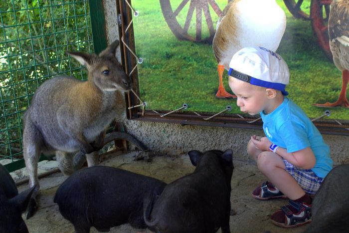 Animals Baby Boy Kind Kinder Mammal Relaxation кабаненок кенгуру поросенок
