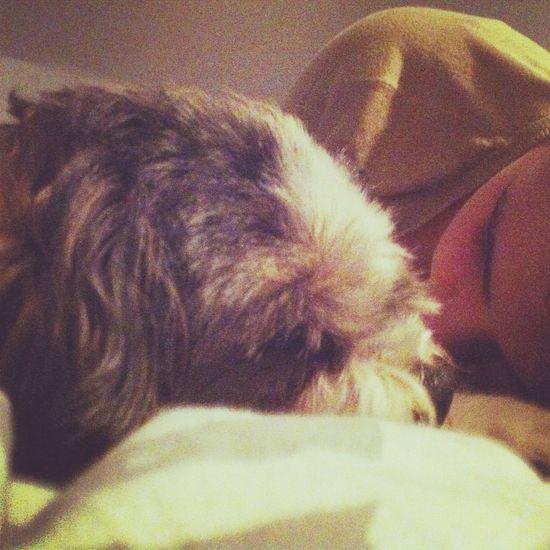 Sleeping with my sweety <3 Dog Myself Sleep Me
