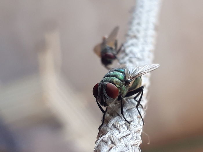 Close-up of flies on thread