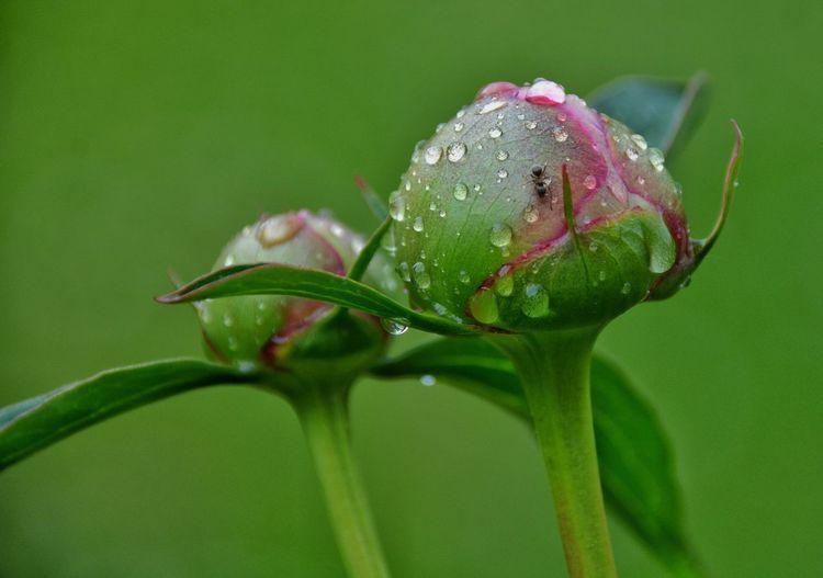 Close-up of wet flower bud
