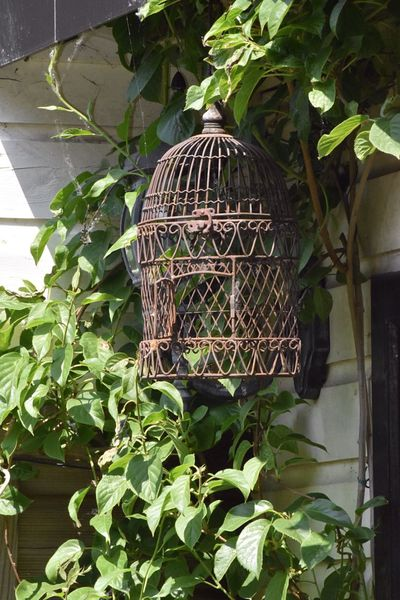 In The Garden Vintage Bird Cage Outdoor Photography Nature Springtime Taking Photos Flowers,Plants & Garden Sunshine Nature On Your Doorstep Steel Cage
