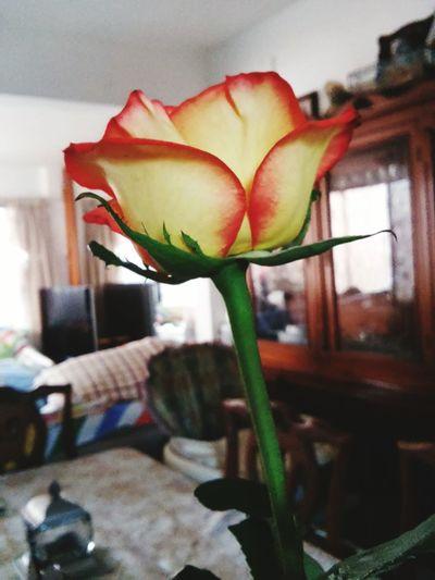 Roses Rose🌹 Rosa🌹