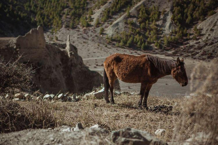 Horse standing on field against mountain
