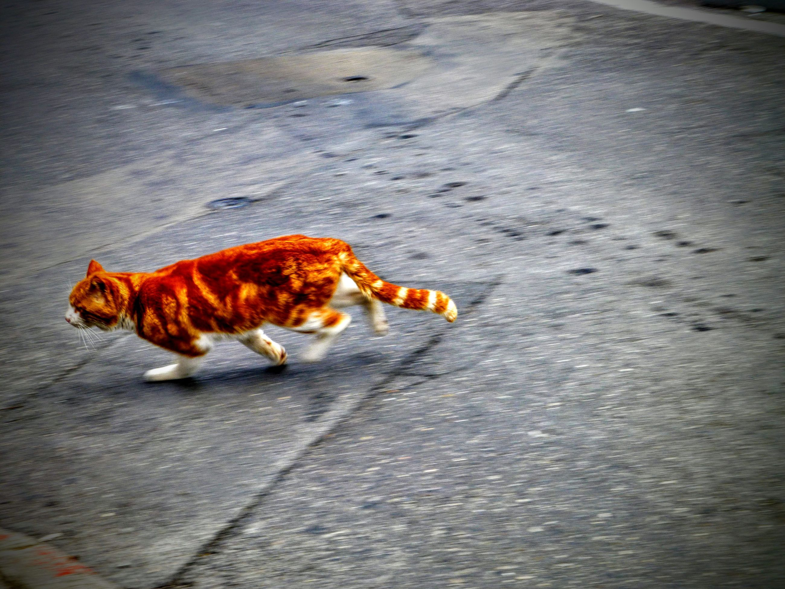 animal themes, one animal, pets, domestic animals, mammal, dog, high angle view, street, full length, road, brown, sidewalk, outdoors, sunlight, shadow, day, no people, asphalt, lying down, zoology