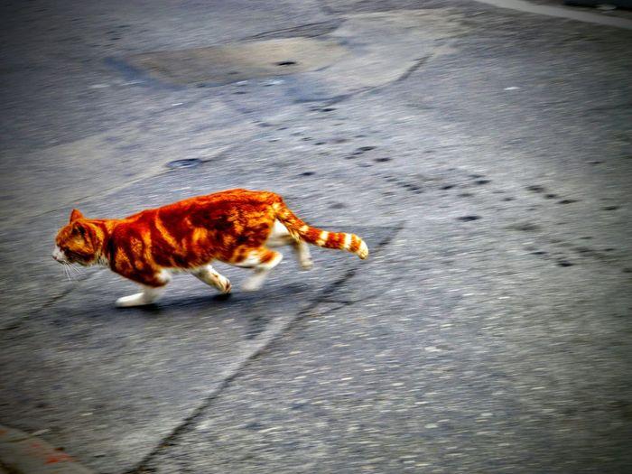 Cat Blur Bright