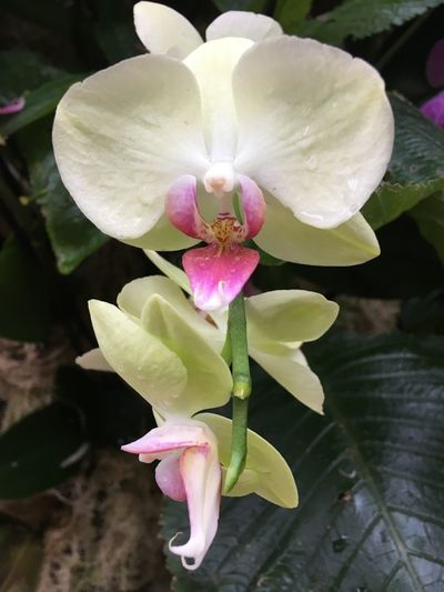 Orchid Flower Petal Beauty In Nature Nature Flower Head Fragility Freshness Growth Plant No People Close-up Pink Color Day Blooming Leaf Outdoors