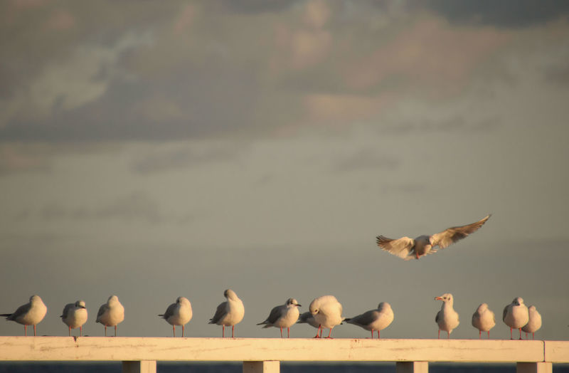 Seagulls perching on fence against sky