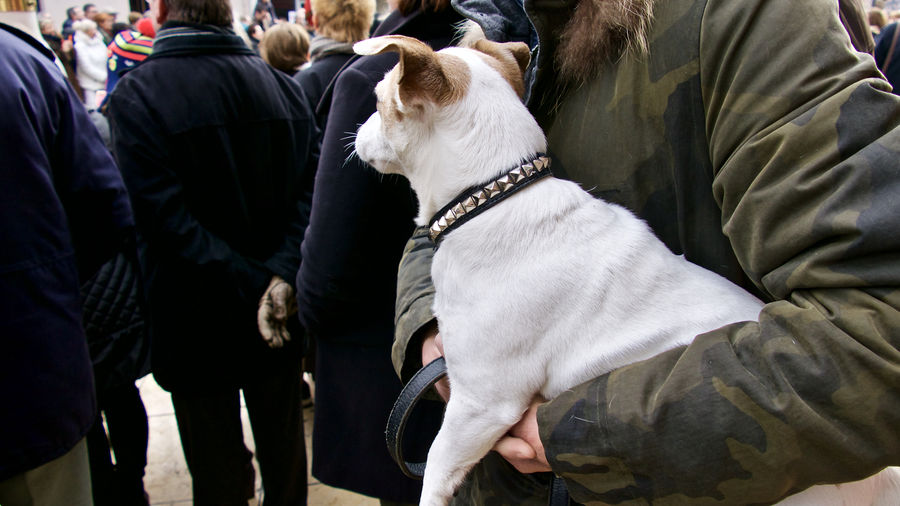 Midsection of person carrying white dog in city