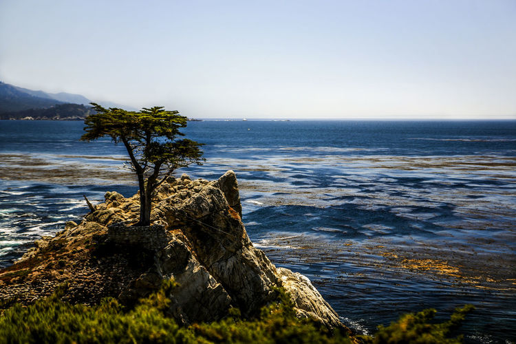17 Mile Drive Beach California Cliff Coast Coastline Famous Place High Angle View Horizon Over Water Lonely Ocean Ocean View Rippled Rock Rock - Object Rock Formation Scenics Sea Shore Strong Surf Tree Water Wave