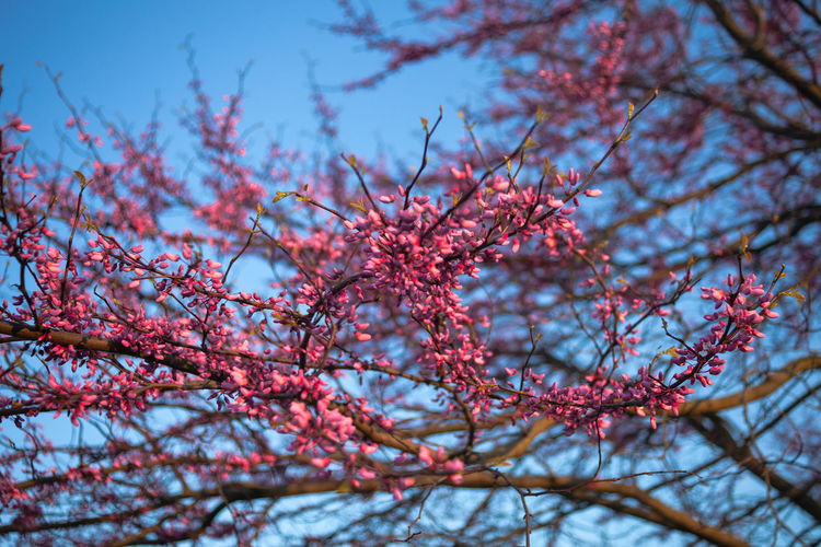 Plant Branch Tree Growth Beauty In Nature Low Angle View Nature Red Day No People Flower Sky Flowering Plant Freshness Focus On Foreground Close-up Selective Focus Springtime Blossom Fragility Outdoors Plum Blossom Cherry Blossom Rowanberry