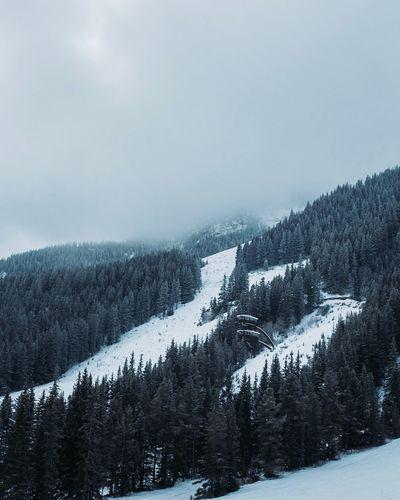 Snow Winter Cold Temperature Tree Plant Beauty In Nature Scenics - Nature Landscape