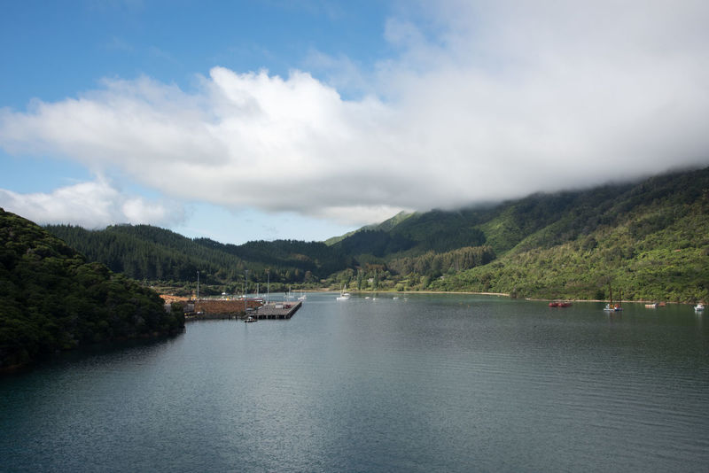 Picton, South Island, New Zealand-December 13,2016: Stunning lush mountain landscape and shipping port in the Marlborough Region in Picton, New Zealand Forestry Harbour Industry Travel Beauty In Nature Cloud - Sky Commercial Dock Export Forest Lush - Description Marlborough Sounds Mountain Nature Nautical Vessel New Zealand Picton  Port Sailboat Sailing Scenics - Nature Shipping  South Island Transportation Water Waterfront