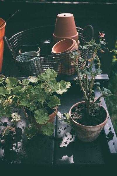 EyeEm Selects Sharing A Moment Taking Photos Garden Trädgården Fujifilm Potted Plant Plant Growth Krukväxter Eyeem Sweden Home Sweet Home Hemma Bäst Kungshamn EyeEm Gallery Day Sverige Getfuji X100f Fujifilm X100f Sotenäs
