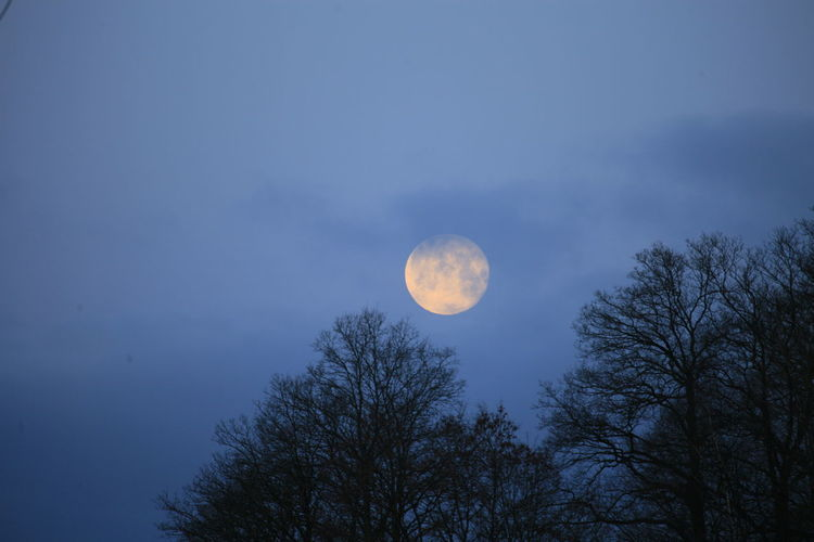 Low angle view of trees against moon at night