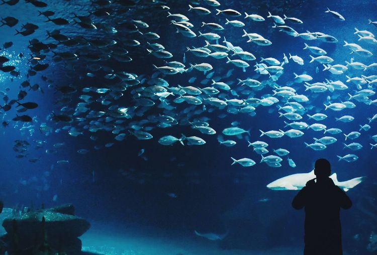 Fishes and a man silhouette EyeEmNewHere City Of Arts And Sciences Of Valencia, Spain SPAIN Silhouette València Animal Wildlife Aquarium Fish Group Of Animals Large Group Of Animals Marine Museum Oceanographic One Person School Of Fish Swimming UnderSea Underwater
