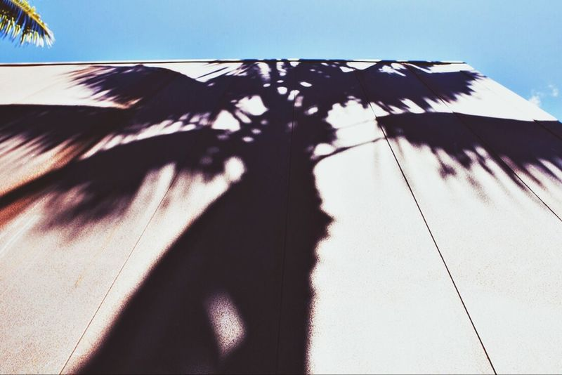 The Eye Em Facebook Cover Challenge Palm Trees From My Point Of View EyeEm Best Shots Surf's Up