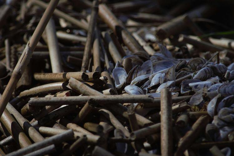 Seashells by wooden sticks