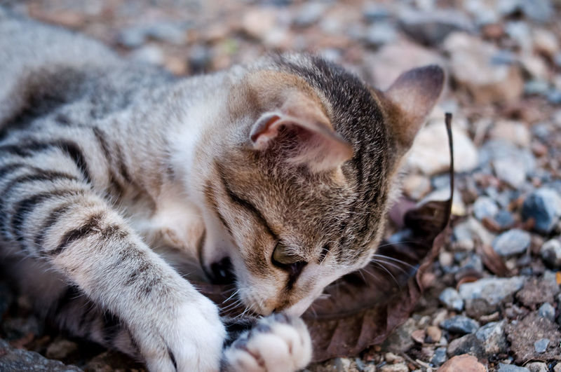 Close-up of a cat relaxing on field