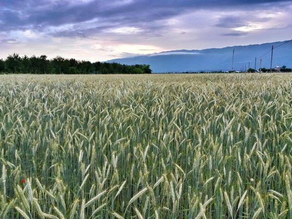 Fields Landscape Pordenone
