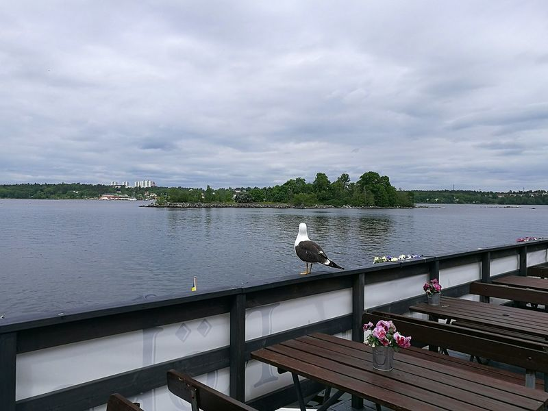 Fjäderholmarna Stockholm Stockholm Archipelago Sweden Tranquility Tranquil Scene Travel Destinations Swedish Nature Swedish Islands Seagull Bird Sky Day Water Outdoors Island Landscape Scenics Nature Clouds Cloudy Day Tables Cafe Dining Area P9