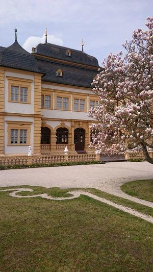 Schloss Veitshöchheim Rokko Springtime Spring Magnolia_Blossom Magnolie