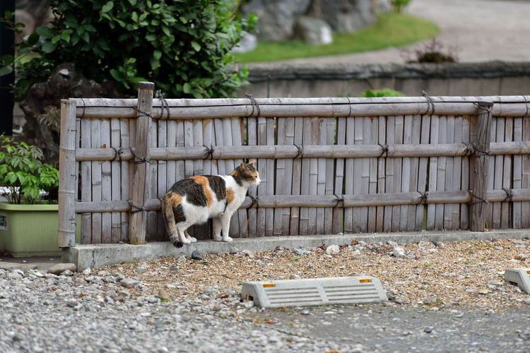 Side view of cat standing against bamboo railing