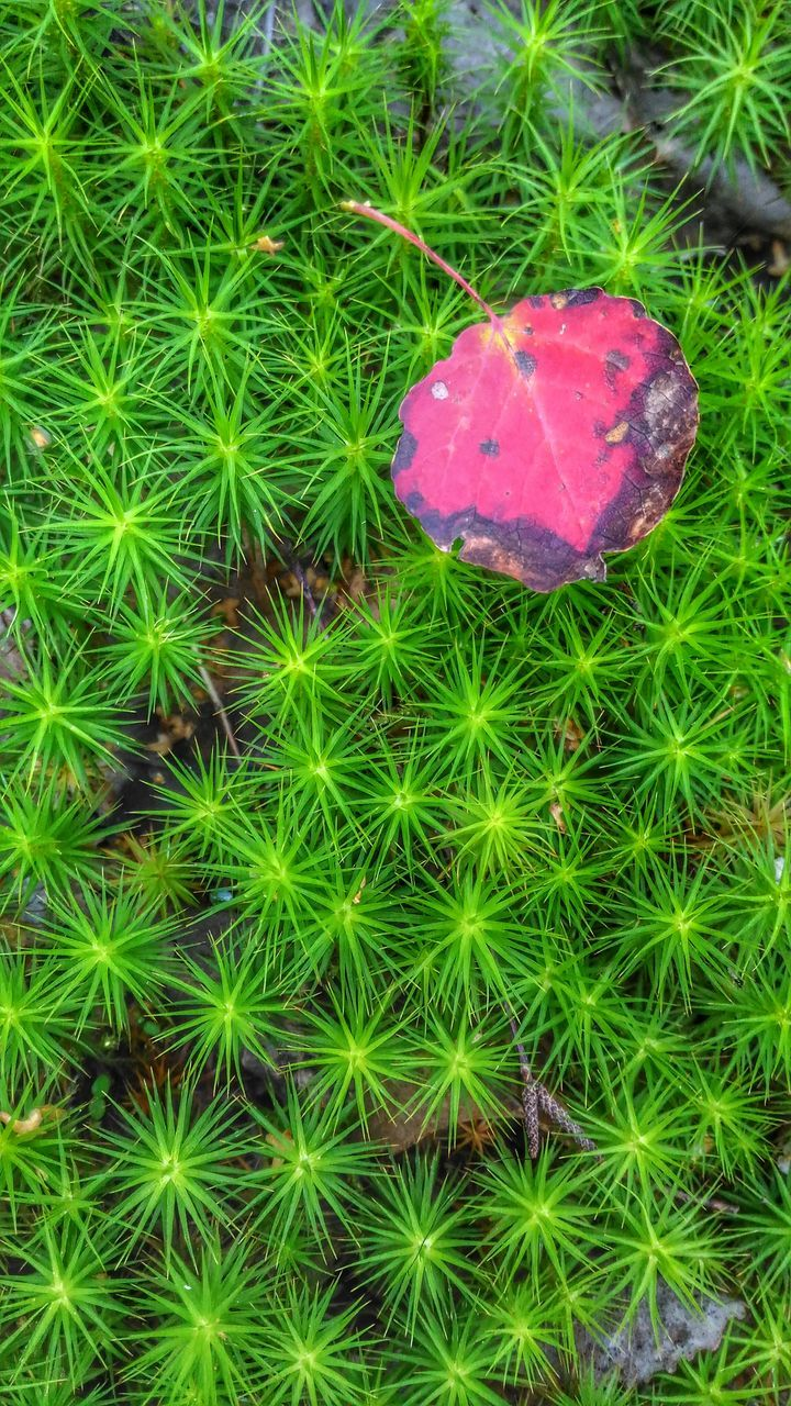 growth, green color, plant, high angle view, cactus, nature, no people, day, grass, outdoors, beauty in nature, close-up