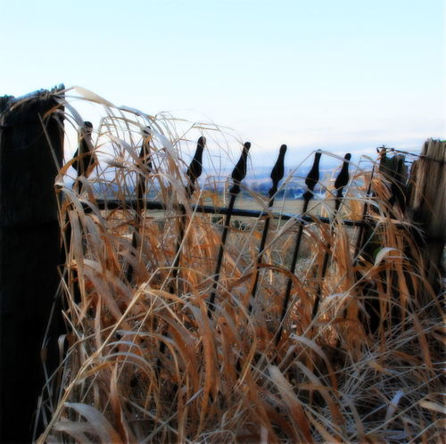 Beautiful Nature Gate Beauty In Nature Clear Sky Day Field Frosty Days Grass Great Lighting Conditions Nature No People Outdoors Sky