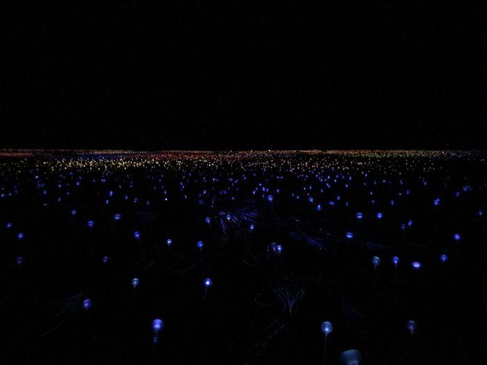 Field of Light Uluru is a Lightinstalation in the Red Centre of Australia Alice Springs Australia Ayers Rock Bruce Munro Bruce Munro Lights Desert Field Of Lights Holiday LED Lights Lightshow Northern Territory Outback Uluru Daytrip Down Under Fibreglass Field Of Light Iconic Longtimeexposure Night Nightshow Red Centre Stars Yulara