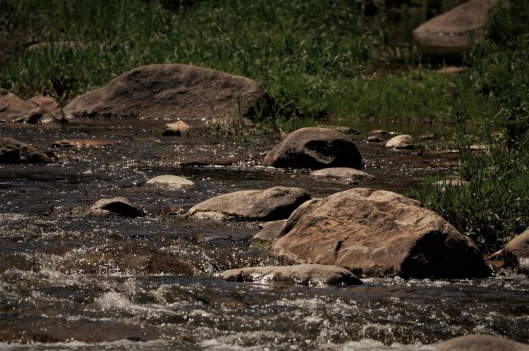Animal Themes Animals In The Wild Day Fast Water Flows Fast Water Streams Mammal Nature No People Outdoors Riverbank Rock - Object Stream - Flowing Water