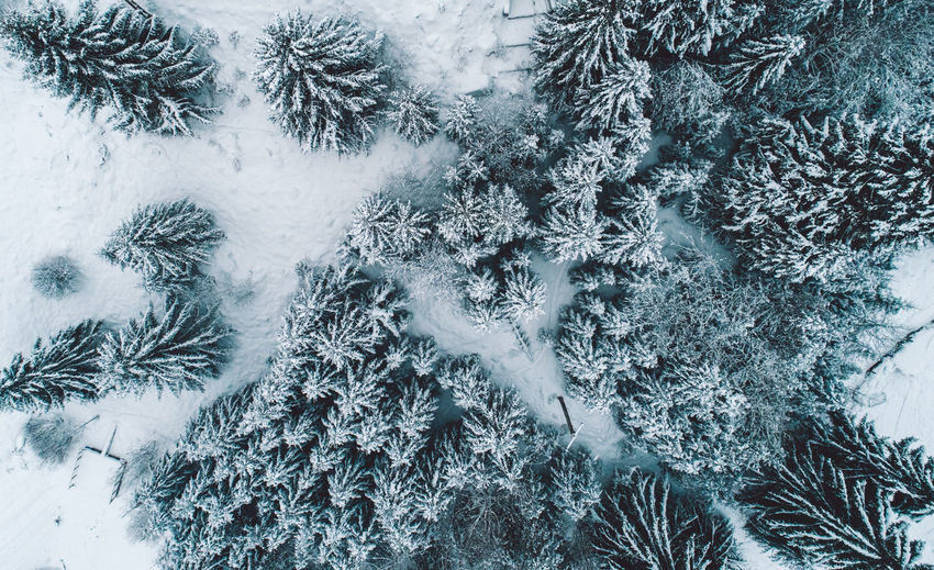 Aerial view of coniferous trees on snowy field during winter