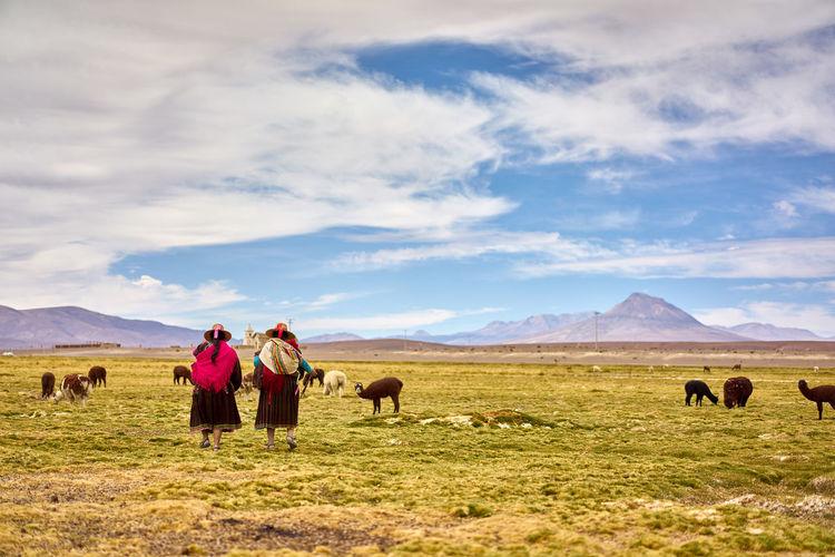 Rear view of female herders with alpacas on field