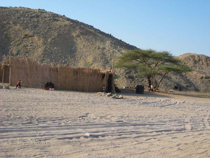 Egypt Beduines Village Life Village Desert Sand Tree Mountain Range Mountain