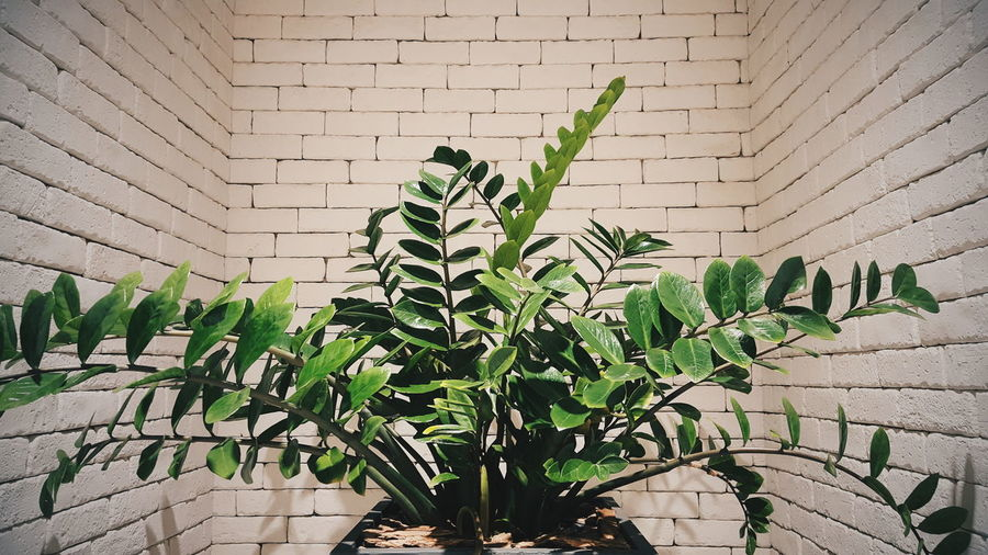 The corner of the building has trees. Corner EyeEm Best Shots EyeEm EyeEmNewHere EyeEm Selects Building Sea Leaf Close-up Plant Green Color Architecture Plant Life Wall - Building Feature Growing Stone Wall