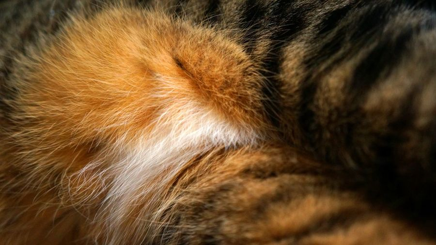 Kitten Belly Animal Body Part Animal Hair Animal Head  Backgrounds Brown Cat Close-up Detail Domestic Cat Extreme Close-up Feline Focus On Foreground Full Frame Mammal Nature No People Part Of Pets Selective Focus Softness Texture Textures And Surfaces
