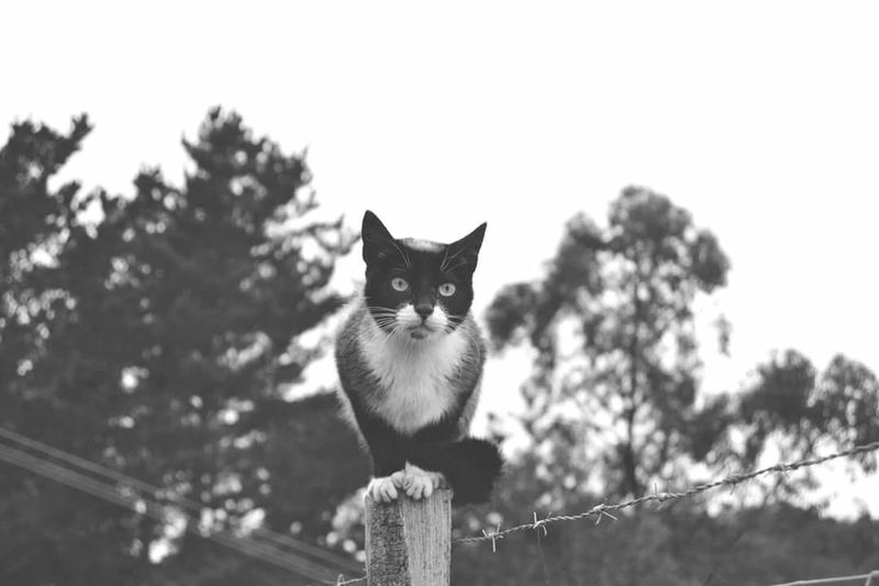 Siempre atento. Blancoynegro Blackandwhite Sansebastian Donostia Paisvasco Euskalherria BasqueCountry Naturaleza Mountain Nature Cat Eyes Cats Animals Gato Animales Gato Callejero Street Cat Monte Postales Welcome To Black
