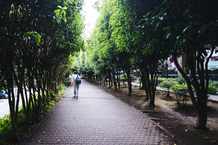 Lost in the city Beauty In Nature Day Diminishing Perspective Footpath Green Color Growth Leisure Activity Lifestyles Narrow Nature Outdoors Pathway Plant The Way Forward Tranquility Tree Treelined Vanishing Point Walkway