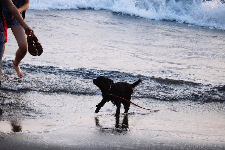 Japan Feelsogood Sea Dog First Eyeem Photo