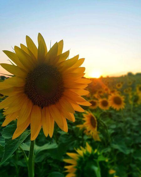 Ve sen geçersin içimden.. Bitmek bilmezsin...🌻 . Ahmet Arif Yellow