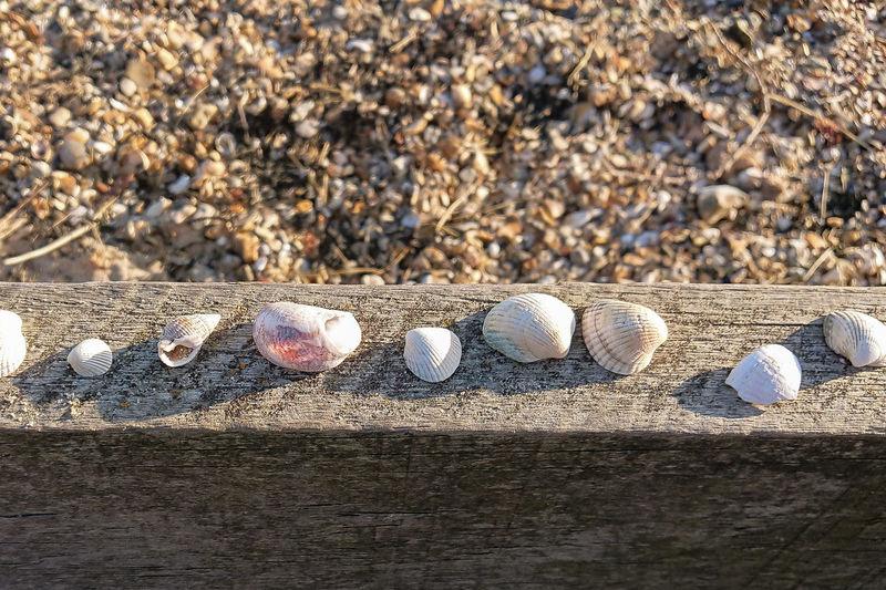 Sea shells Shells Sea Shells Beach Sand Sunlight Shadow High Angle View Close-up Pebble Pebble Beach