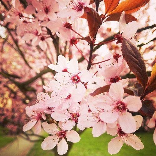 Cudownie Wiosna Taka Piekna springtime spring beauty beautytime