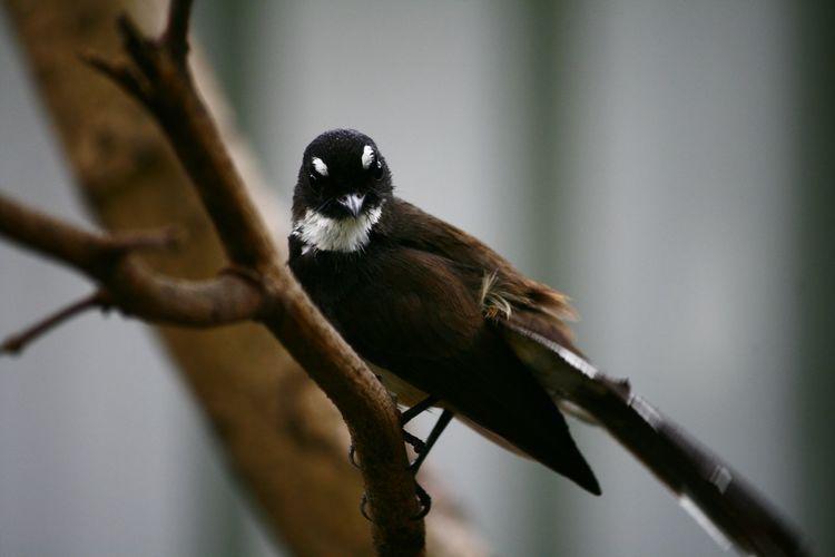 Bird Photography Bird On The Tree Animal Bird Bird Collection Bird In Nature Bird In Actionใน Dusit, Thailand