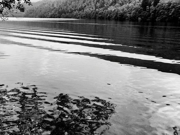 lago Lake Lake