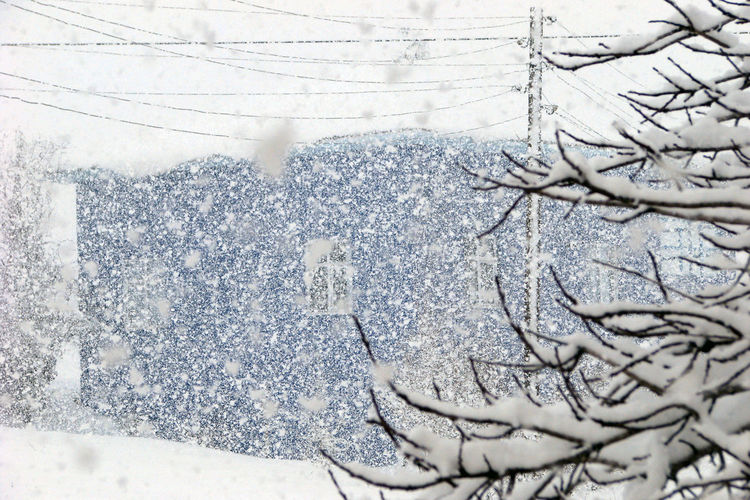 Architecture Beauty In Nature Blizzard Close-up Cold Temperature Day Environment Extreme Weather Frozen Ice Nature No People Outdoors Plant Scenics - Nature Snow Snowcapped Mountain Snowing Storm Tire Tree White Color Winter