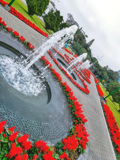 Exceptional Photographs EyeEm Best Shots Beauty In Nature Day Eye4photography  Flower Freshness Low Angle View Nature No People Outdoors Red Sky Water Water Fountain