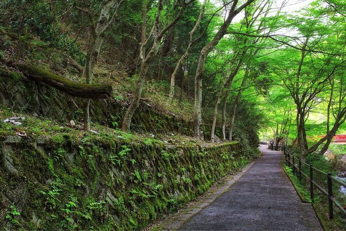 -Green Path- Tree Nature Footpath Green Color Forest Travel Destinations Tourism Beauty In Nature No People Tree Area Japan Photography Japan Landscape Travel Adventure Outdoors Canon5Dmk3 Canonphotography Seto Sigma 35mm Art Scenics