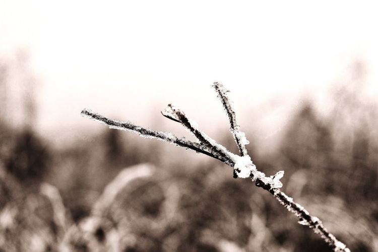 Frozen Ice Frost Frozen Baum Ast EyeEm Best Shots First Eyeem Photo No People Nature Day Focus On Foreground Close-up Plant Sky Growth Outdoors Beauty In Nature Clear Sky Winter